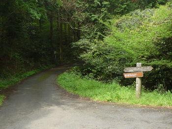 P1330041林道糸米線出合い.JPG