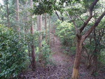 P1330061植林境鞍部.JPG