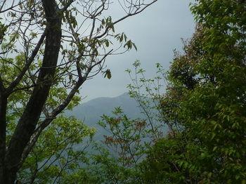 P1330097東鳳翩山.JPG
