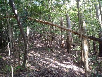 P1330154 280m支尾根合流点・植林境・上り.JPG