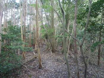P1330159植林境・280m鞍部.JPG