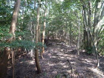 P1330160植林境・上り.JPG