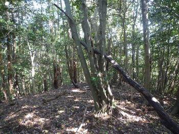 P1330161 植林境・290mピーク①.JPG