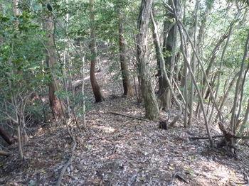 P1330162植林境・下り.JPG