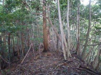 P1330163植林境・290mピーク②.JPG