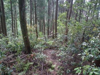 P1330191植林尾根の踏み跡・下り.JPG