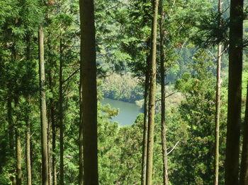 P1330216錦鶏湖.JPG