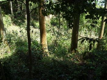 P1330229300m鞍部から林道方向.JPG