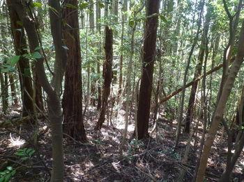 P1330233植林支尾根・下り.JPG