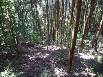 P1330248右に植林境が分かれる.JPG