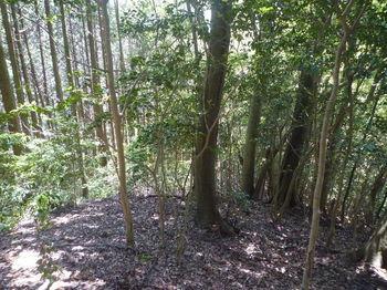 P1330249左植林沿い.JPG