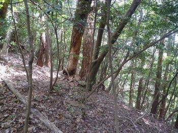 P1330391右ヒノキ林境.JPG