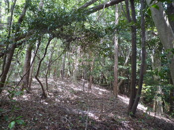 P1330393ヒノキ林境.JPG