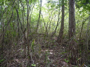 P1330409植林境から三角点ピーク.JPG