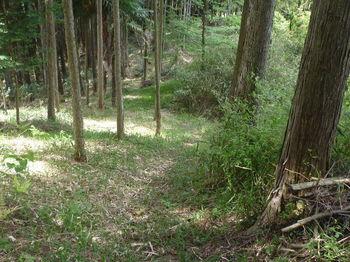 P1330412植林境の道.JPG