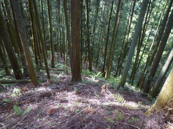 P1330418植林斜面.JPG