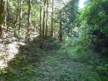 P1330459植林沿い.JPG