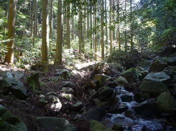 P1330473植林沿い.JPG