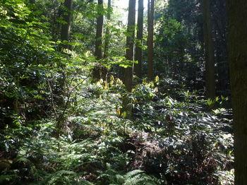 P1330482植林沿い.JPG