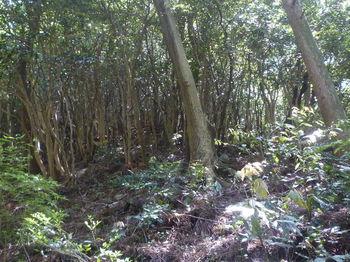 P1330494植林頂部・雑木疎林.JPG