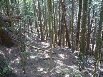 P1330542鞍部(逆方向)・植林境・古道.JPG
