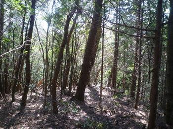 P1330547植林境.JPG
