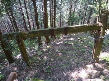 P1330569朽ちかけた木の鳥居.JPG