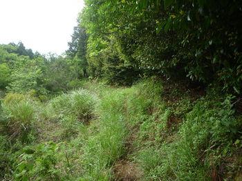 P1330590草被り気味・旧耕地沿い.JPG