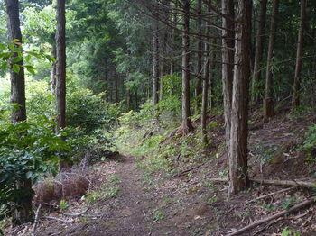 P1330592植林沿い.JPG