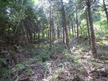 P1330641植林沿い.JPG