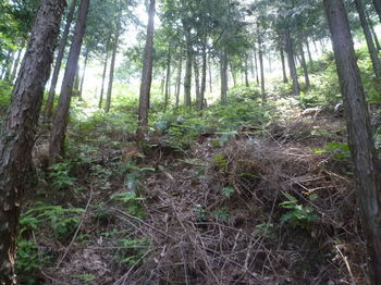 P1330647植林谷を登る.JPG