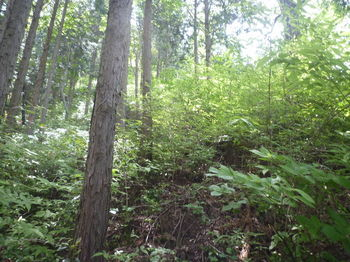 P1330672植林境.JPG