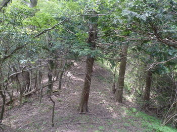 P1330707 植林境.JPG