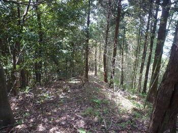 P1330724植林境・下り・タケが交じる.JPG