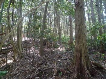 P1330749植林境・上り.JPG