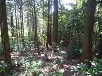 P1330751植林境.JPG