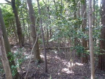 P1330762植林沿い.JPG