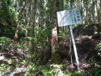 P1330787公社造林看板.JPG