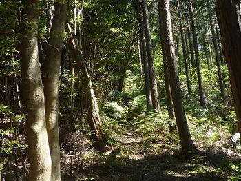 P1330798植林境.JPG