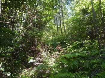P1330799シダ被りの植林境.JPG