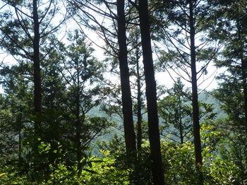 P1330809樹間越しの展望.JPG