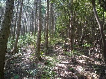 P1330810植林境・上り.JPG