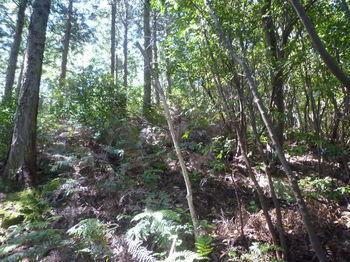 P1330812植林境・シダ被り.JPG