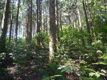 P1330814植林境.JPG