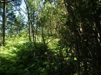 P1330817植林境・シダ被り.JPG