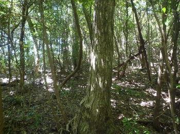P1330819右の雑木疎林へ逃げる.JPG