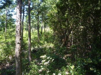 P1330820植林境.JPG
