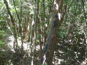 P1330826右の雑木林に逃げる.JPG