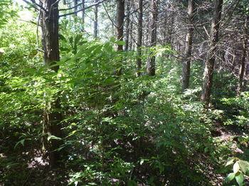P1330828右の植林側へ逃げる.JPG