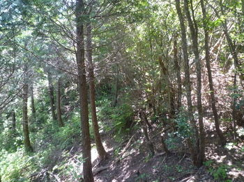 P1330845植林境斜面.JPG